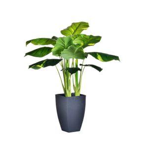 Planta-con-pote