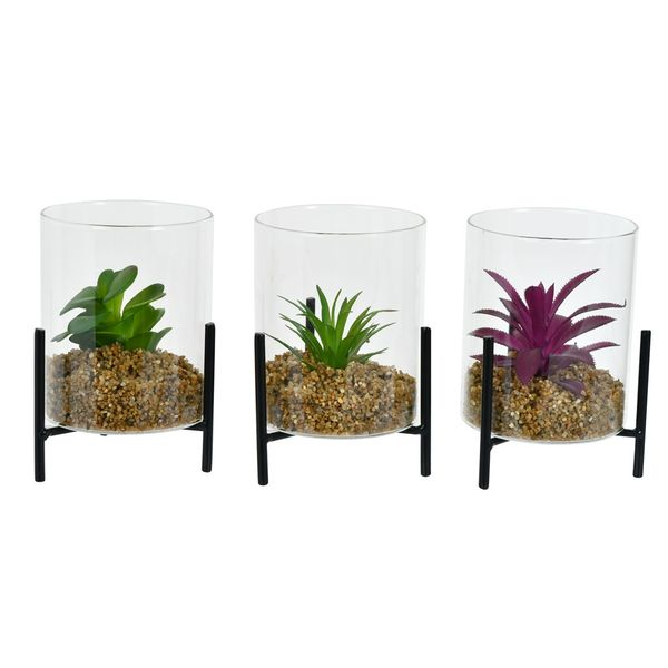 Planta-con-Base-Vidrio