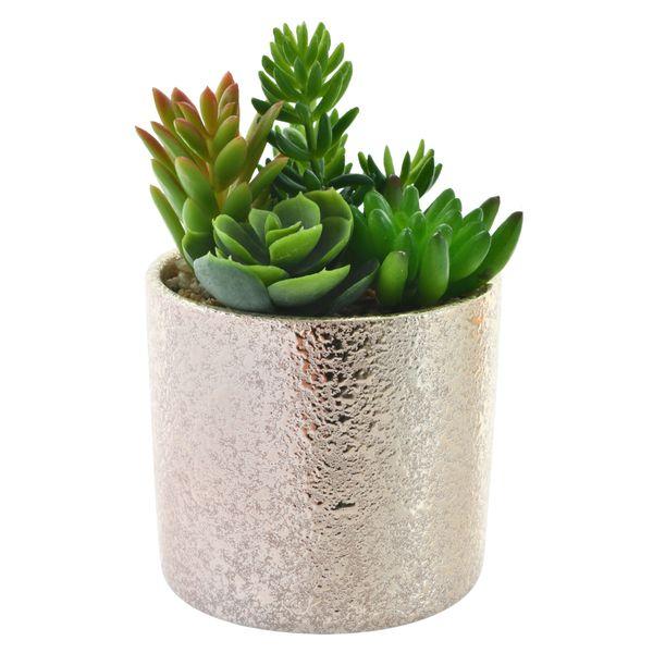 Planta-con-Pote-Plateado-Suculentas