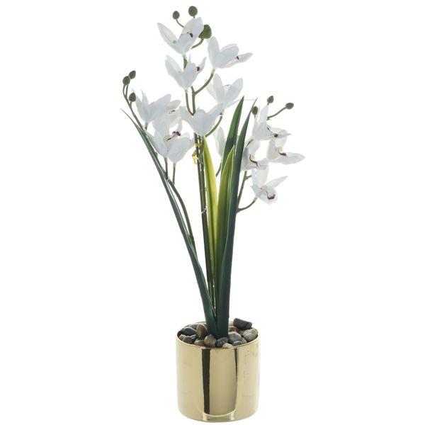 Orquidea-Chica-Blanca-con-Pote