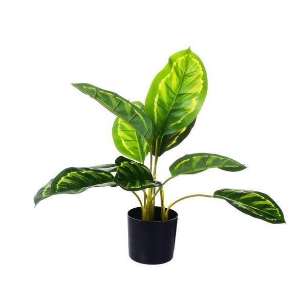 Planta-con-Pote-Mediana