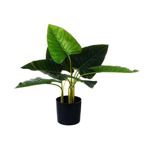 Planta-con-Pote-Chica